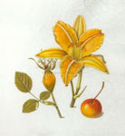 Ashfield Composition:  Orange Daylily, Eglantine Rose Hip, Crab Apple, 2008